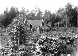Bra att veta – Stora Mossens Koloniträdgårdsförening